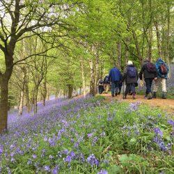 Walking group through bluebells